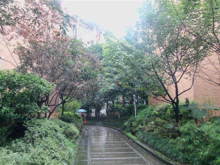 房子花园速写风景图片